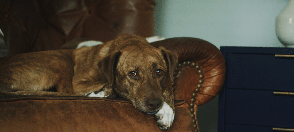 Best furniture for pet owners