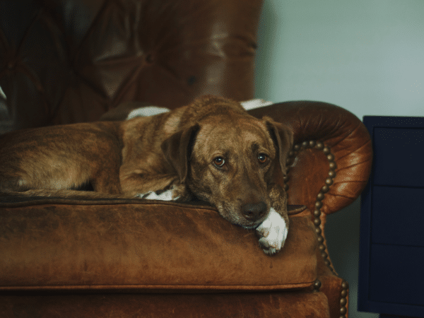 What Are The Best Recliners For Pet Owners?
